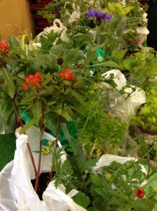 The Plant Stall