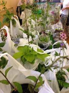 Blooming Bargains on the Plants Stall