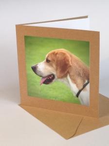 A hound in profile