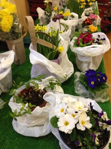 Spring Flowers on the plant stall at Clitheroe Country MArket